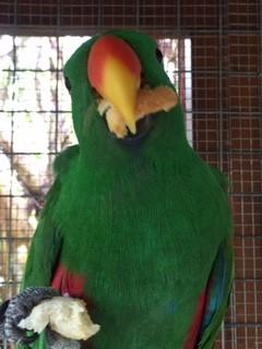 Meet Our New Parrot