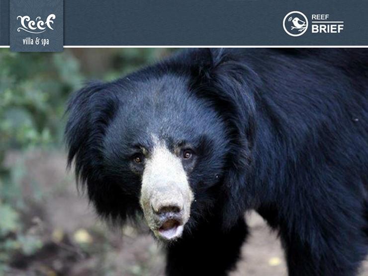 So Paddington Bear of Deepest, Darkest Peru is Back in London